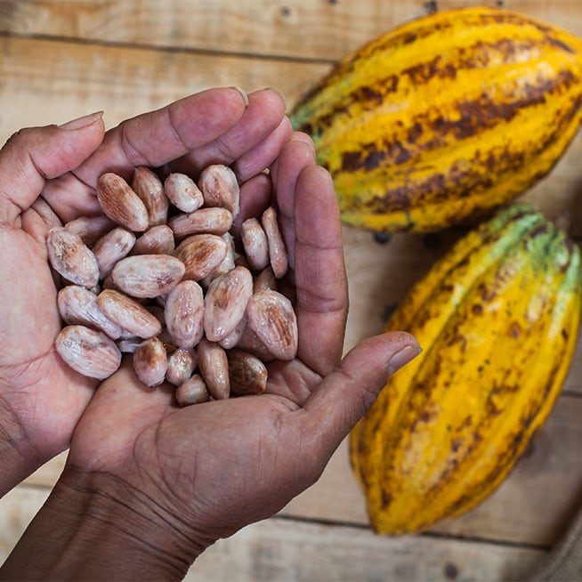 During your travel in Ecuador, taste one of the best cocoa in the world